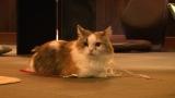 7月21日放送、テレビ東京系『超かわいい映像連発!どうぶつピース!!』猫カフェに1日密着(C)テレビ東京