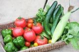 自分の畑で採れた野菜 (C)oricon ME inc.