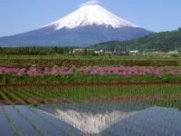 『2013年 エンタメ10大ニュースランキング』<br>8位は【富士山の世界文化遺産登録決定】