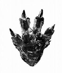 過去最大の大きさになる新作『ゴジラ』の足型