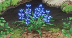 """7年に一度しか咲かない魔女の国から盗み出された禁断の""""花"""""""