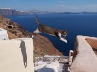 ジャンパー 場所:ギリシャ 『劇場版 岩合光昭の世界ネコ歩き コトラ家族と世界のいいコたち』