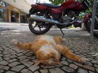 シキンニョ 場所:リオデジャネイロ 『劇場版 岩合光昭の世界ネコ歩き コトラ家族と世界のいいコたち』