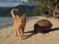 ハナ 場所:ハワイ 『劇場版 岩合光昭の世界ネコ歩き コトラ家族と世界のいいコたち』
