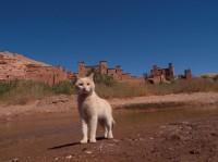 インディゴ 場所:モロッコ 『劇場版 岩合光昭の世界ネコ歩き コトラ家族と世界のいいコたち』