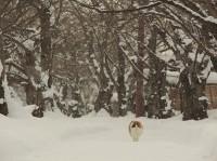 ミュウミュウ 場所:青森県 『劇場版 岩合光昭の世界ネコ歩き コトラ家族と世界のいいコたち』
