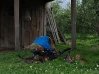 場所:青森県 『劇場版 岩合光昭の世界ネコ歩き コトラ家族と世界のいいコたち』