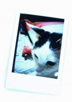 「プリントス」でプリントすれば、ペットの写真を飾るのも配るのも手軽に