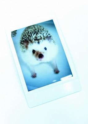 もちろん、自慢のペットの写真も配りたい。「そのハリネズミ、開発メンバーのペットなんです」(土肥さん)という裏話も