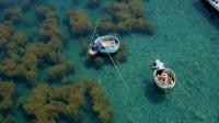たらい舟漁