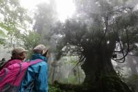 巨木が生える森