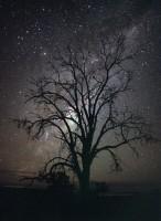 心に残る星景02『星のなる樹』 —ウィリアムズ〔オーストラリア・西オーストラリア州〕