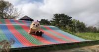 滑り台で遊ぶちぃたん☆(カワウソちぃたん☆ YouTubeより)
