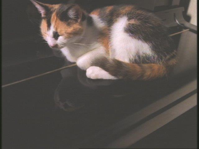 ピアノ タレント タケモト