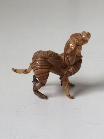 セミの抜け殻アート「イヌ」
