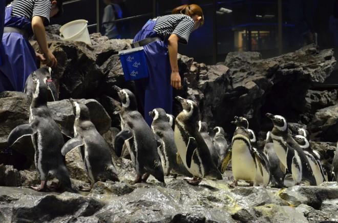 朝食時に集まってきたペンギンたち (C)oricon ME inc.