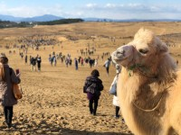 「ポケモン GO サファリゾーン in 鳥取砂丘」の様子