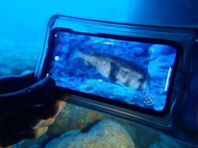 防水ケースに入れれば、ダイビング中でも使用可能