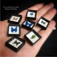 【蝶の標本アート】制作&写真/meq