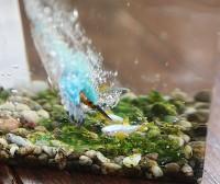 【川に勢いよく飛び込んで魚を捕るカワセミのインテリア】制作・写真/sawamin