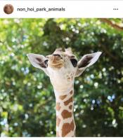 キリンの赤ちゃんユララ