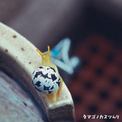 タマゴノカスツムリ。タマゴ科ウズラ属。感情がすぐ顔にでるといわれ、状況によって殻の模様が変化するという。