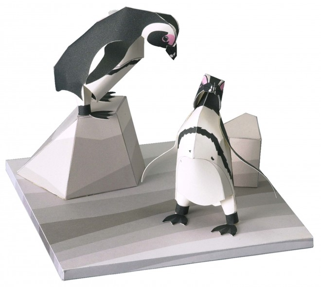 希少動物 ケープペンギン