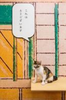江戸の街並みでくつろぐ『江戸ねこ茶屋』の保護猫たち
