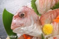 『いわさきカレンダー2019』より「鯛の顔」