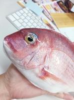 「いわさき」公式Twitterより「オフィスにフレッシュ真鯛」