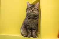 映画『ねことじいちゃん』主演の1人、猫のベーコン