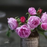 【イングリッシュローズのチャールズレニーマッキントッシュ】制作&写真/ROSY