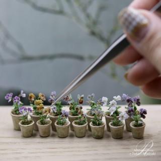 3ミリに満たない花びらに見事なグラデをつけたビオラ。