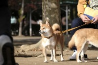 ドラマ『柴公園』オフショット