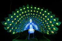 『チャイナランタンフェスティバル』で展示されている「孔雀」