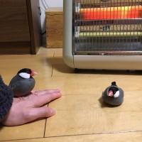 「はらちゃん?あったかいところを知ったら本気で動かない。だいぶ高温で心配になる程。ストーブ切って移動させても暖かい床にへばりついてなお動かない。」(1/5)