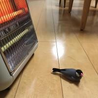 「はらちゃん?あったかいところを知ったら本気で動かない。だいぶ高温で心配になる程。ストーブ切って移動させても暖かい床にへばりついてなお動かない。」(4/5)