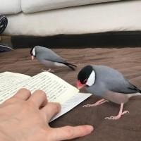 「読書を見守ってくれています。読書中にチョロチョロするのが可愛くて全然集中して読めてないんですけどね。 手前ルル  奥はらちゃん」(2/2)
