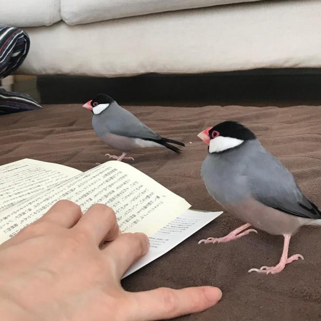 「読書を見守ってくれています。読書中にチョロチョロするのが可愛くて全然集中して読めてないんですけどね。 手前ルル  奥はらちゃん」(1/2)