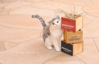 羊毛フェルト 角スリスリ猫