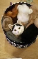 羊毛フェルト 猫 ズラ制作途中