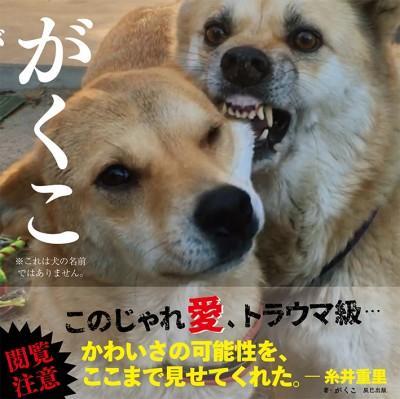 辰巳出版から3月22日に発売される写真集『がくこ』/こてつちゃん(10歳)&なむちゃん(4歳)