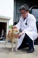 犬の様子を見る徳田竜之介先生