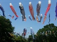 鯉のぼり 写真提供:「すみだ鯉のぼりフェア」すみだカットクラブ