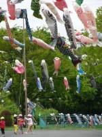鯉のぼりと園児たち  写真提供:「すみだ鯉のぼりフェア」すみだカットクラブ