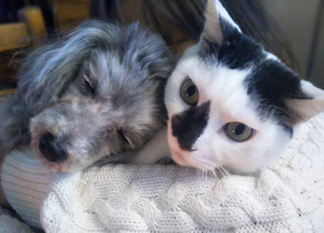 『犬と猫どっちも飼ってると毎日たのしい』作者の松本ひで吉さん家の猫と犬