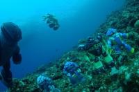 宮古島で実施した水中撮影企画『ProjectM』