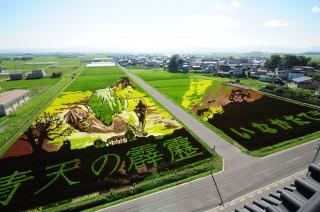 年々進化していく田舎館村の田んぼアート 画像提供:田舎館村