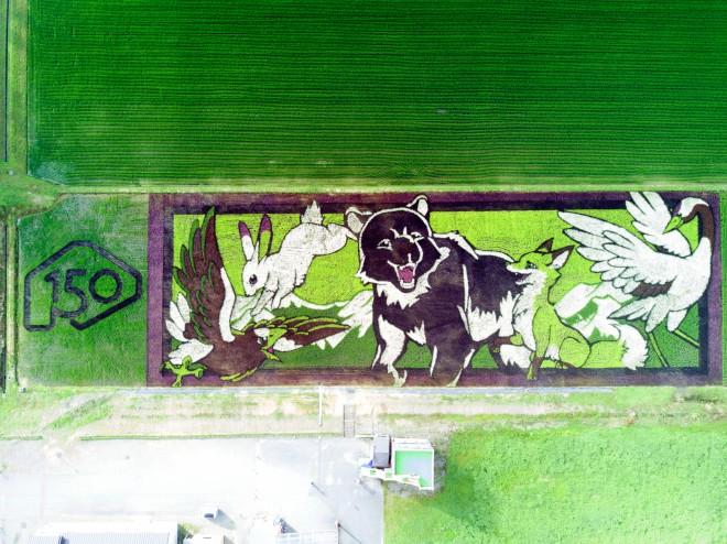 北海道150周年を記念した動物たち