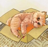 #お気に入りの箱 #ちょっと小さめ? #そこが良いのかもしれない